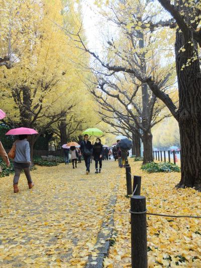 「 雨の外苑 いちょう並木 ~ 表参道 へ ぶらり散歩」  2014