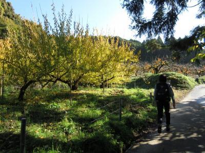 紅葉狩り<奈良・山の辺の道編> 2014年 秋