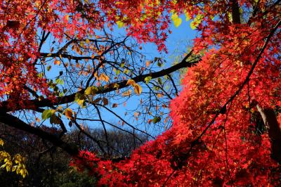 2014 秋 東京大学散歩−3 紅葉の三四郎池