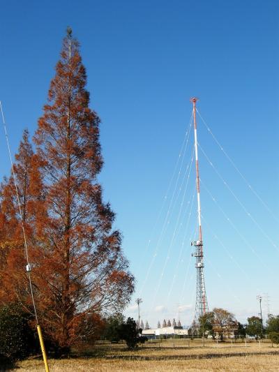 「さわやかOB会の歩こう会」は209回目はNHKラジオ電波塔往復のウォーキングで見つけた秋