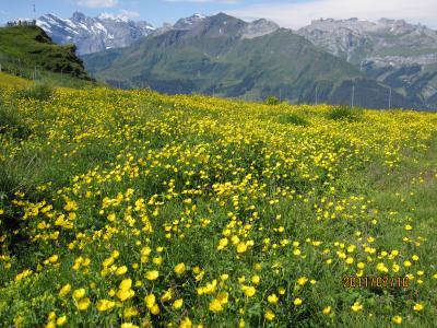 2011年7月スイス-2 夢に見たハイジの世界 お花畑のメンリッヒェンとフィルスト