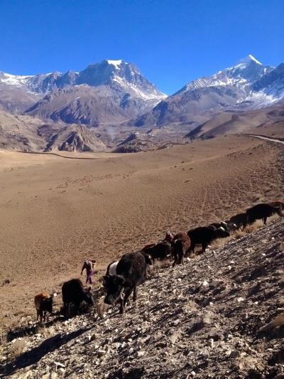 壮大な自然と心温まる里村 ネパール・ジョムソム街道