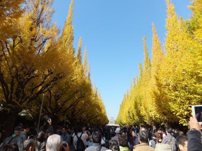 神宮外苑いちょう並木、今年も行って来ました!