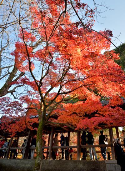 一泊2日の京都で紅葉狩り(2日目~東福寺と平等院~)
