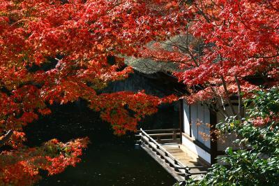 2013年最後の紅葉めぐりは和歌山へ