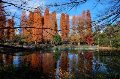 紅葉の素晴らしい 井の頭公園 散歩 下