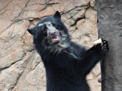 2014年12月 レッサーパンダを見に行こう! よこはま動物園ズーラシア2