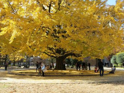 イチョウの散歩道で暮れゆく秋を感じよう@東京大学