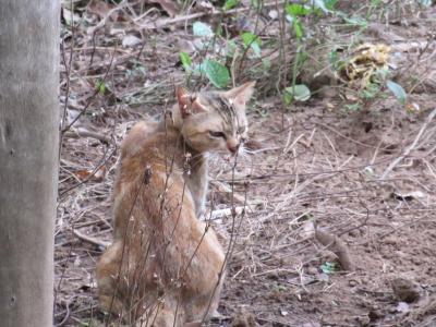 猫探し,2014【ベトナム・Viet Nam(ビーチリゾートブンタウ(Vung Tau)の猫)編】