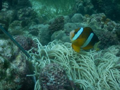 短い休暇でも行けるセブ島でダイビング