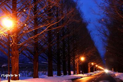 関西1dayパスで雪化粧の彦根城・玄宮園~マキノ高原・街灯の点るメタセコイア並木