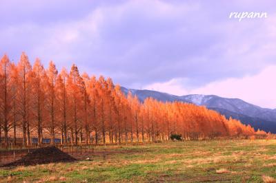 青春18切符一人旅 メタセコイア並木のオレンジロードを歩く 滋賀・マキノ高原