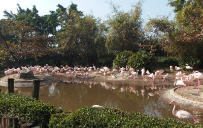 大浴場があるホテルに泊まって台湾一周・・・八日目「動物園に行こう」 台南編②