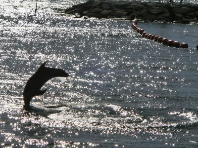 イルカの休日
