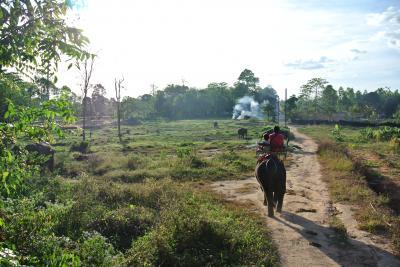 タイ・チャーン島1歳6歳子連れ旅(2) バイクに乗って象に乗ろう!