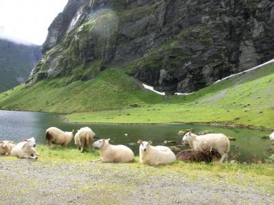 ノルウェー人お勧めのドライブルートで行くガイランゲルフィヨルドの旅 vol.1(2011年8月)