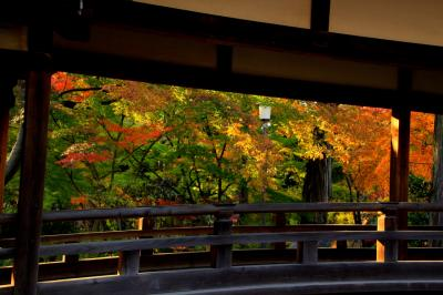 川越 喜多院、中院の紅葉