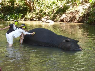 スリランカ、ハード女子旅(2015年)2~ピンナワラで象さん三昧