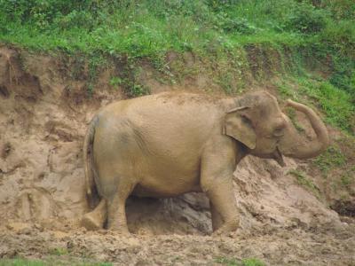 スリランカ旅行5 ~ピンナラワの象の孤児院~