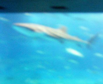 沖縄・美ら海水族館(06.09)