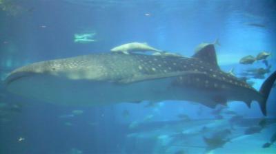 沖縄・美ら海水族館(09.11)
