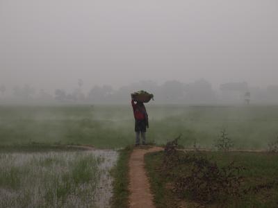 久々に五感、いや六感を刺激された旅、インド    (6分の5 ブッダガヤ編)