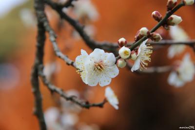 立春、春の訪れを確かめに鎌倉へ