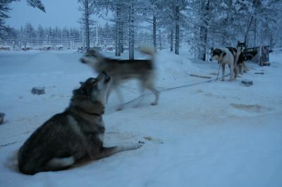 2010フィンランド vol.03 サーリセルカ