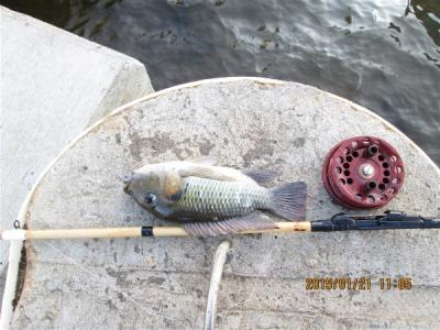 4タイトル名 Alawai Canalでテラピア釣りだ