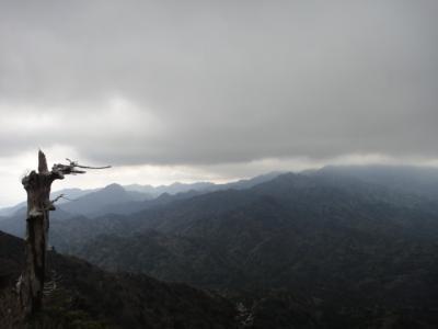 ひとり旅:屋久島3 太鼓岩・苔むす森