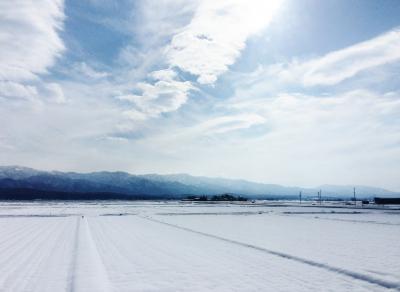 珍しく晴れた冬の新潟、新発田から阿賀野・水原、白鳥の瓢湖へ!