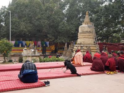 ビックリ驚き、祈る犬(インド)※特別篇