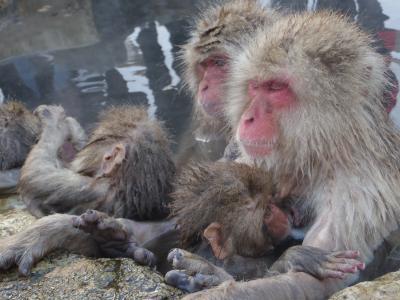 温泉に入る猿を見に行こう☆