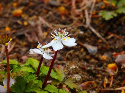 マラソンランナーの足音が響く林の中でひっそりと可憐にそして凛として咲く早春の草花