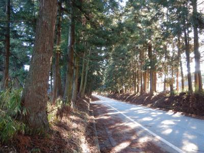 造り酒屋と杉並木を巡る日帰り旅
