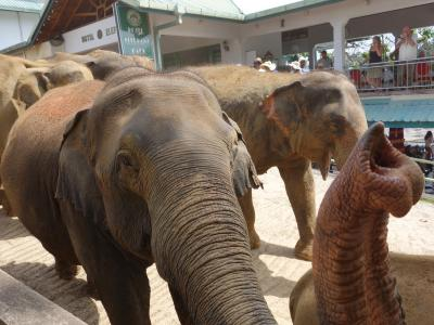 ☆2015冬 光輝く島スリランカ・4泊6日一人旅【5】~ピンナワラ象の孤児院編~☆