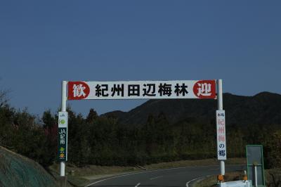 旅するイルカ♪ 和歌山 田辺梅林、みなべ梅林へ