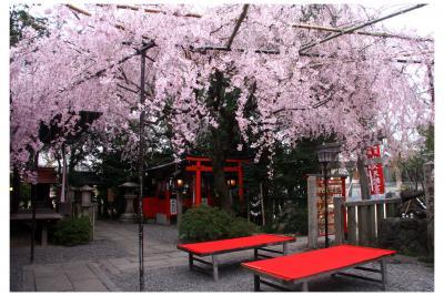 西陣エリアの桜散策!小さい境内と青い空を覆い尽くす桜が圧巻!