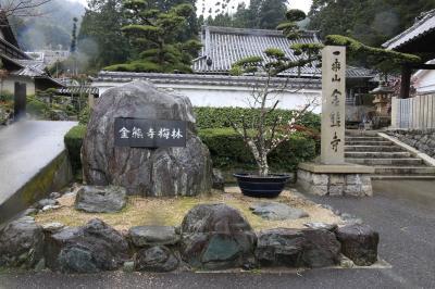 旅するイルカ♪ 大阪 金熊寺梅林&盆梅庭園へ