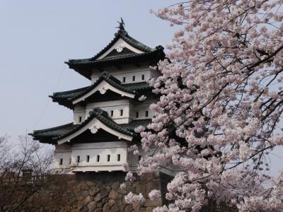 ~春爛漫!弘前城の昼桜と夜桜~ *この眺め、今年(2015年)見逃したら、しばしお別れに。