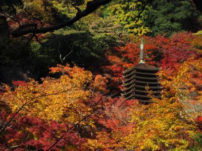 紅葉に映える十三重塔。