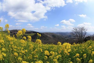 菜の花と動物達に癒されに。千葉県富津市のマザー牧場