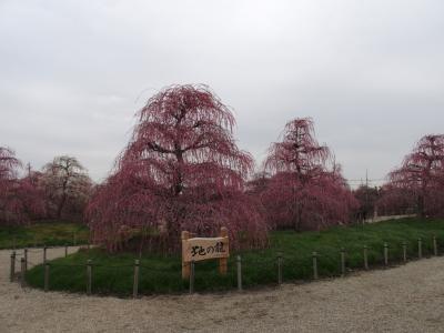 鈴鹿の森庭園梅まつり2015