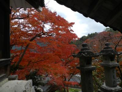 ARICさん・ちょんたさん・かずママさん、ようこそ奈良へ!◆長谷寺で紅葉を楽しみました~♪