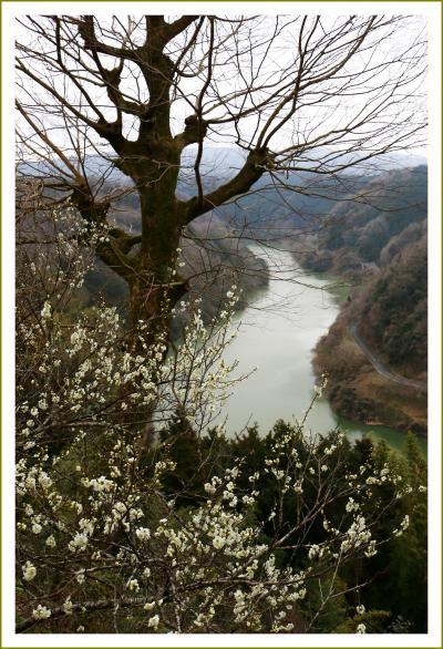 Solitary Journey [1540] 梅の花は2~3分咲き、冴えない観梅散策。でもV字渓谷の景色が良かったです。<月ケ瀬梅渓>奈良県奈良市