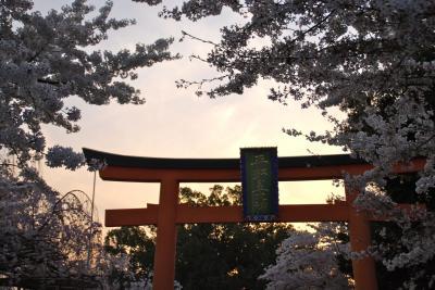ひとりお花見部 2014③ 花まつりは京都でお花見 ー夕暮れは静香~平野神社篇