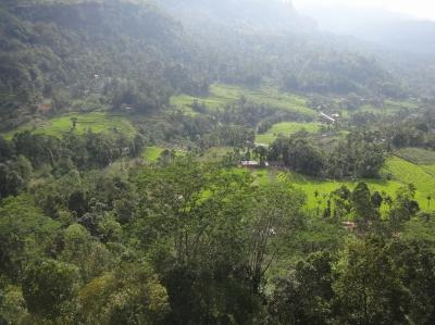 高原の避暑地、紅茶の産地でスリランカ最後の日を楽しむ
