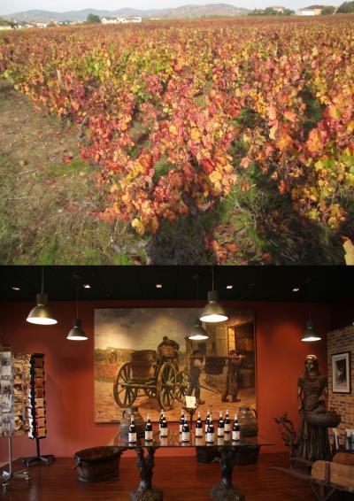 スコットランド・フランスの旅2014 14.ボジョレーのワイナリーを訪ねて Découvrez les crus du Beaujolais