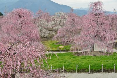 三重県で梅まつりを楽しむ