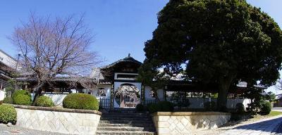 名古屋市昭和区・香積院(こうじゃくいん)・しだれ桜